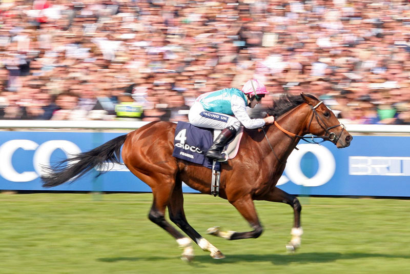 Frankel during the 2000 Guineas